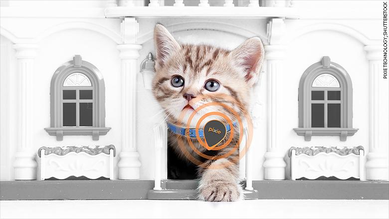 pixie technologies cat